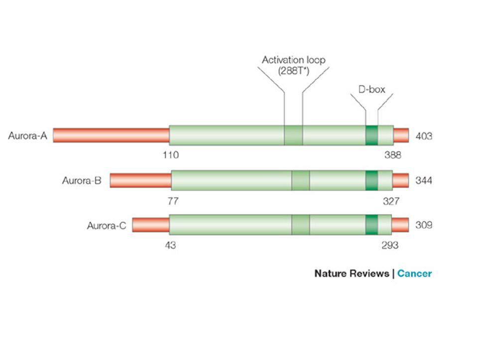 Figure 1 | Structure of human Aurora kinases