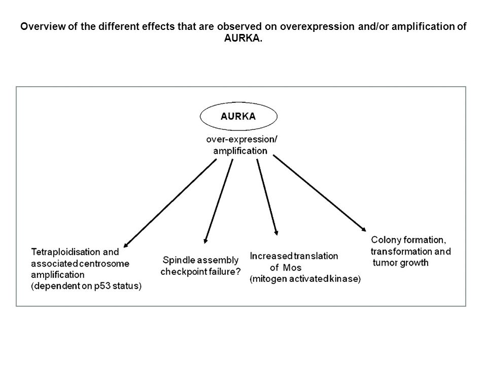 Overview of the different effects that are observed on overexpression and/or amplification of AURKA.