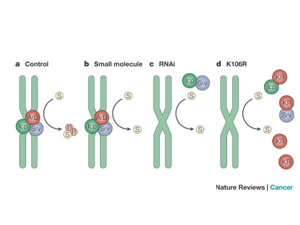 Pharmacological versus genetic inhibition
