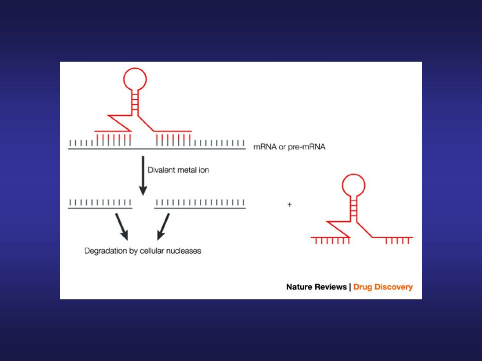 Mechanisms of nucleic-acid-based approaches for gene silencing: ribozymes.