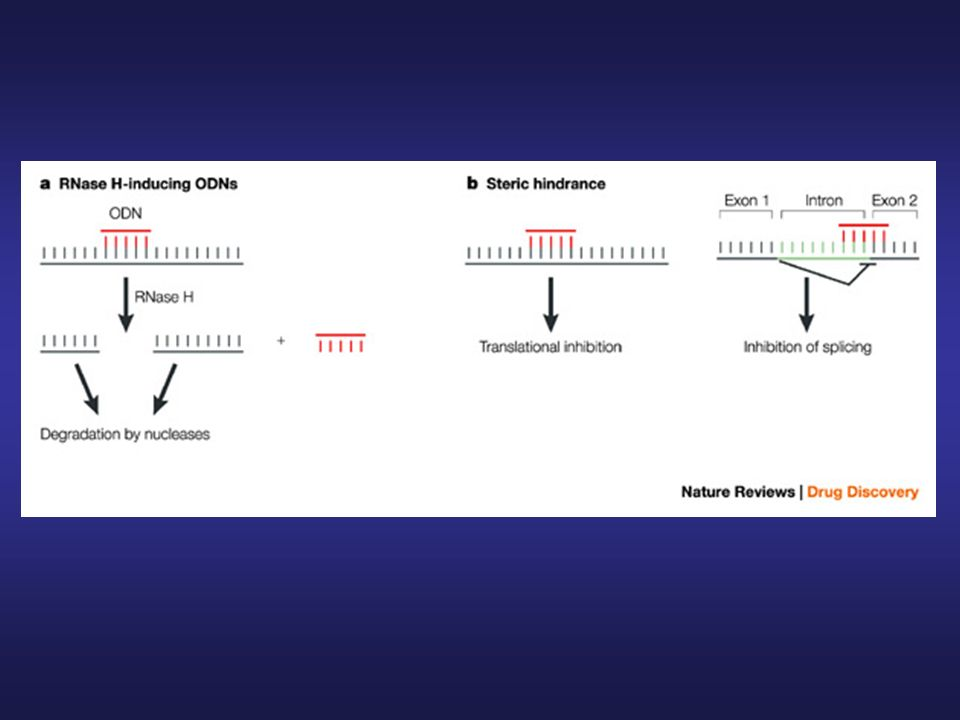 Mechanisms of nucleic-acid-based approaches for gene silencing: antisense compounds.