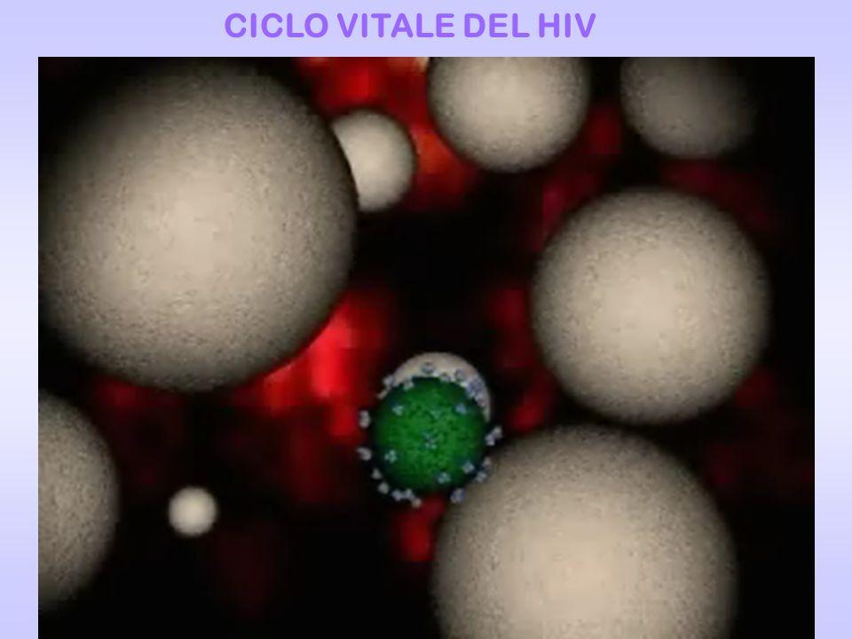 CICLO VITALE DEL HIV
