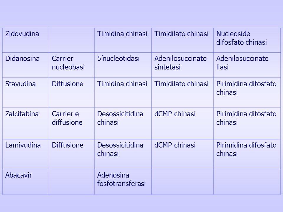 Zidovudina Timidina chinasi. Timidilato chinasi. Nucleoside difosfato chinasi. Didanosina. Carrier nucleobasi.