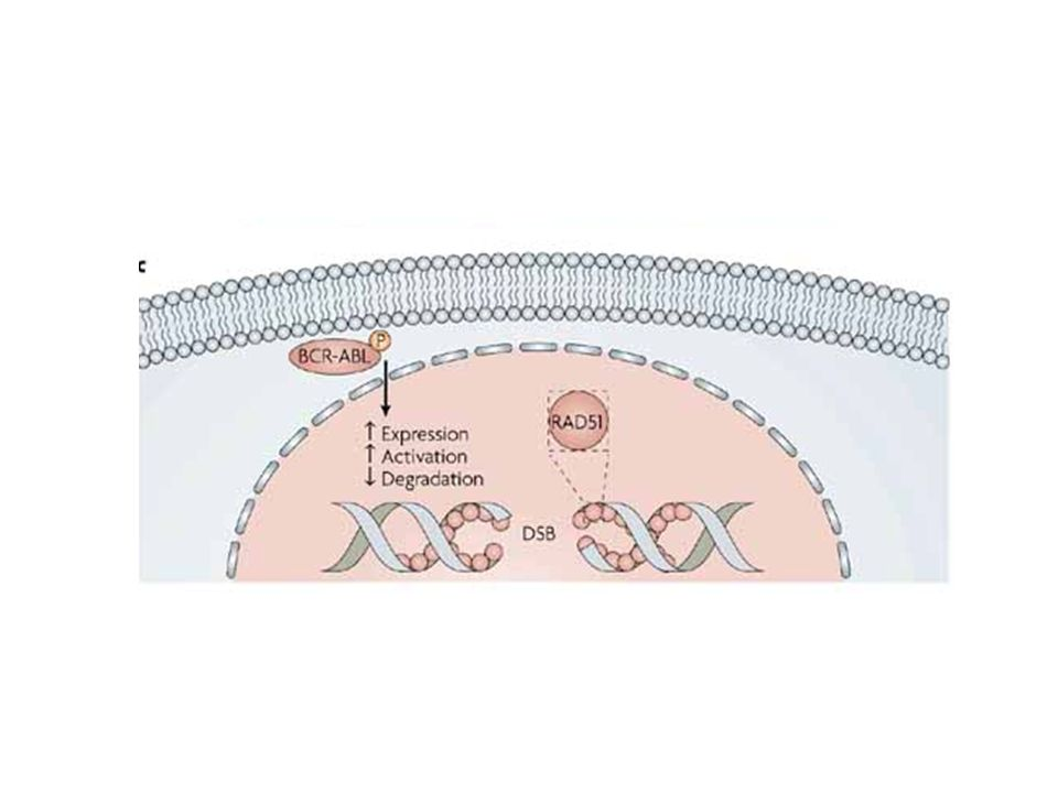 c | BCR-ABL interferes with the repair of DNA double-strand breaks (DSBs) through several effects on the DNA repair protein RAD51.