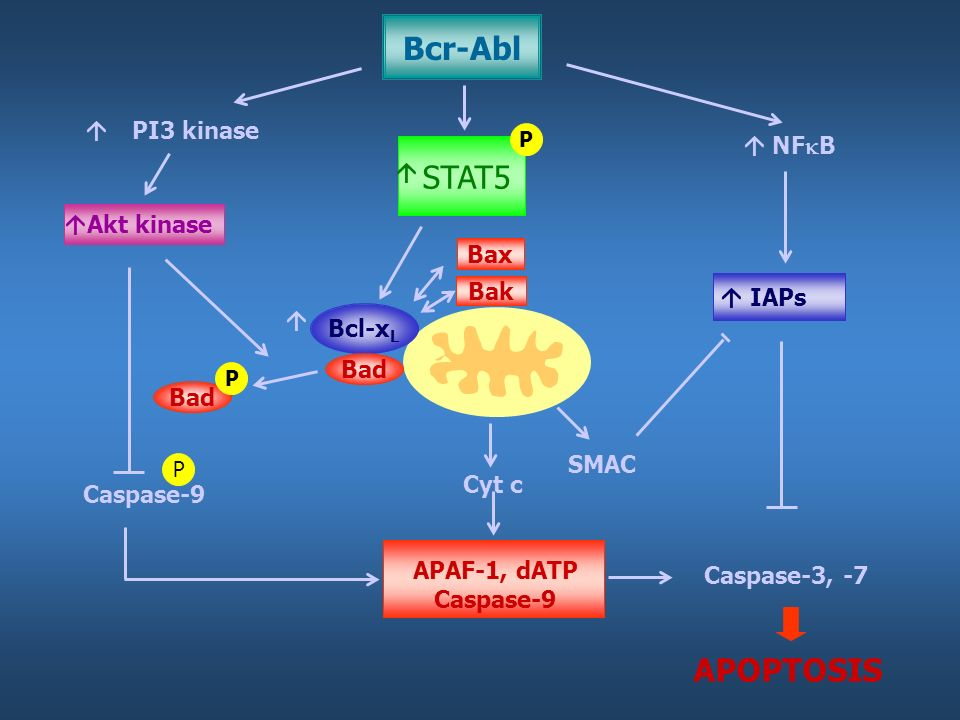 Bcr-Abl STAT5 APOPTOSIS  PI3 kinase  NFB Akt kinase Bax Bak IAPs