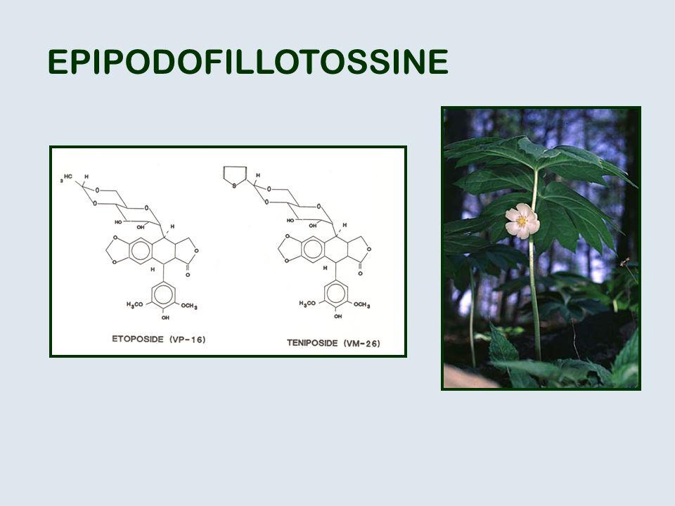 EPIPODOFILLOTOSSINE