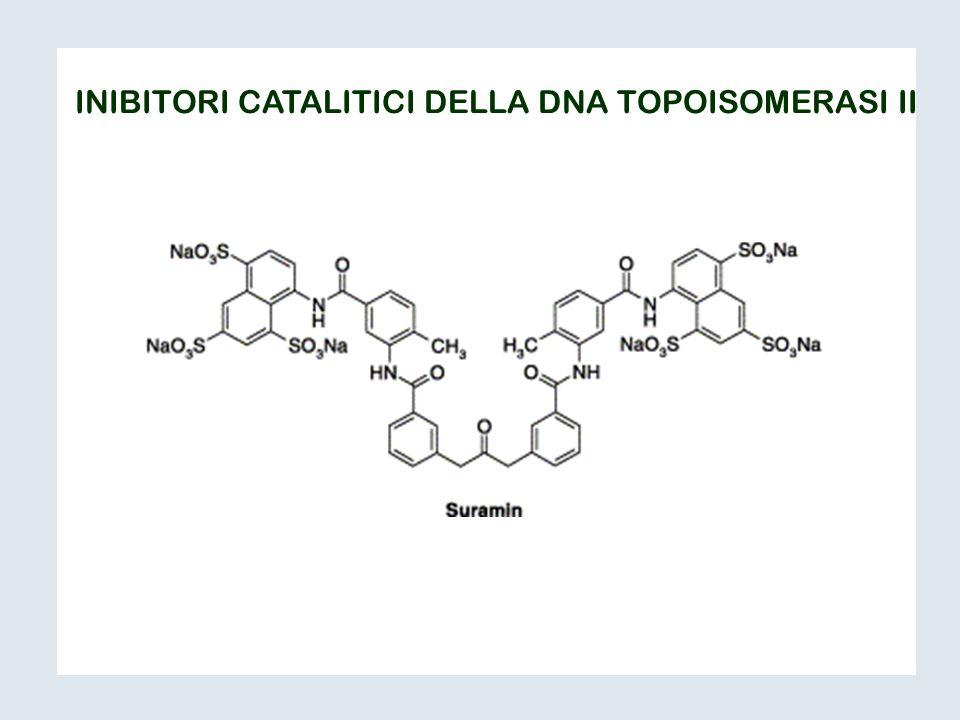 INIBITORI CATALITICI DELLA DNA TOPOISOMERASI II