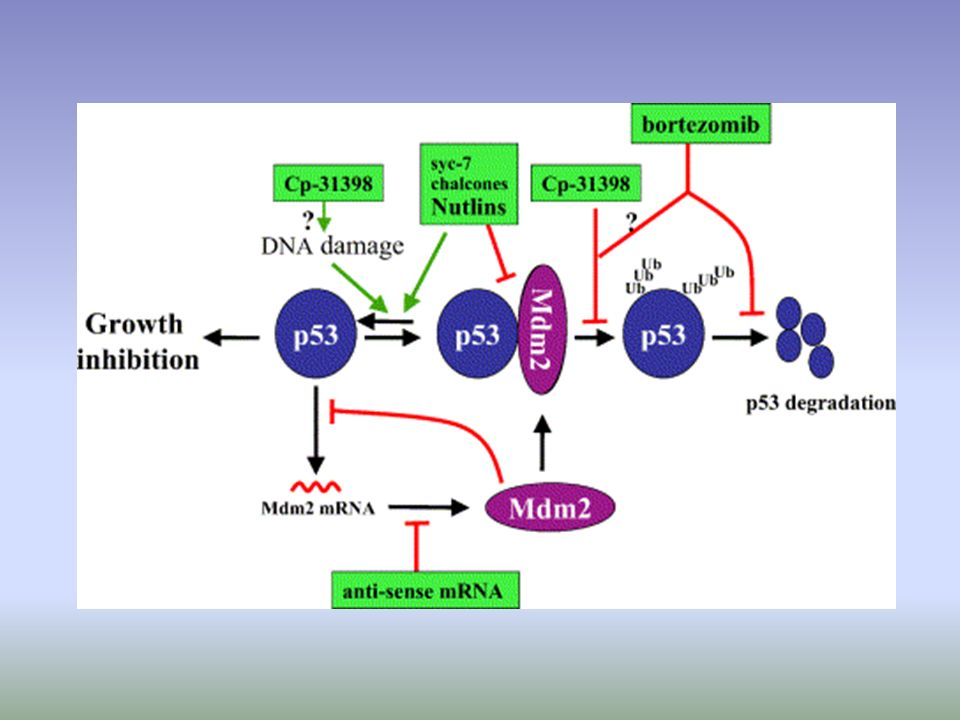 Promotion of wt p53 activities through protection from Mdm2-mediated inhibition.
