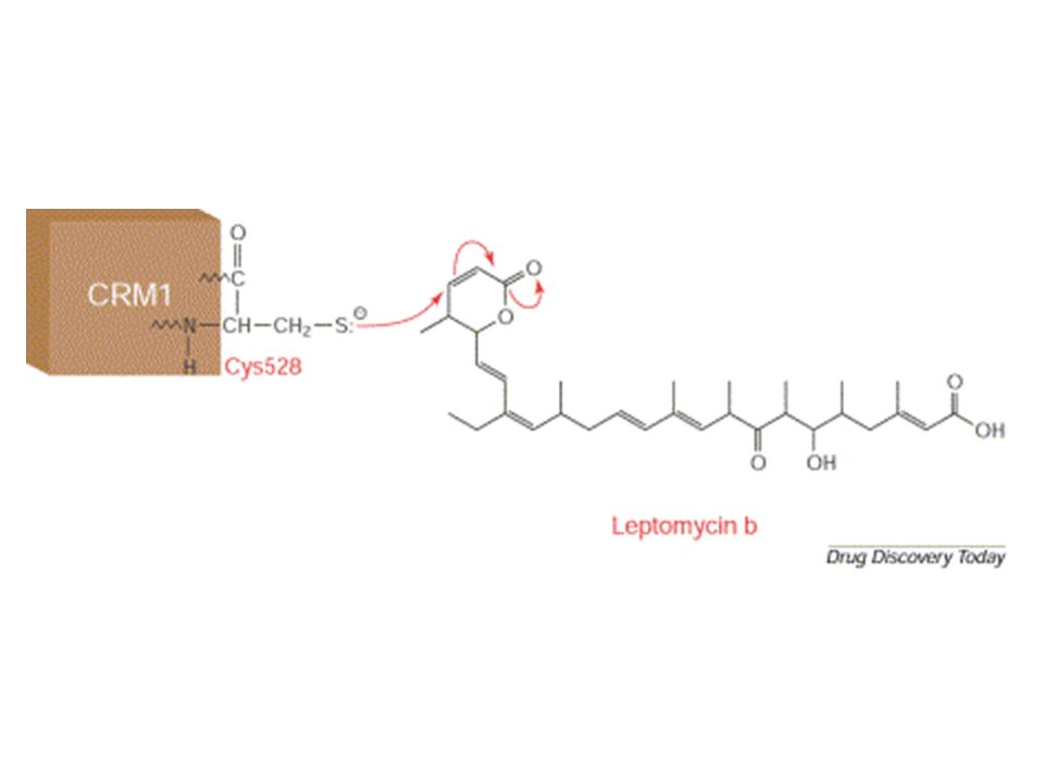 Leptomycin B (LMB) is an unsaturated branched-chain fatty acid and can undergo a Michael-type addition by Cysteine-529 on the exportin CRM1. This covalent modification inhibits binding between CRM1 and the nuclear export signal (NES)-containing cargo.