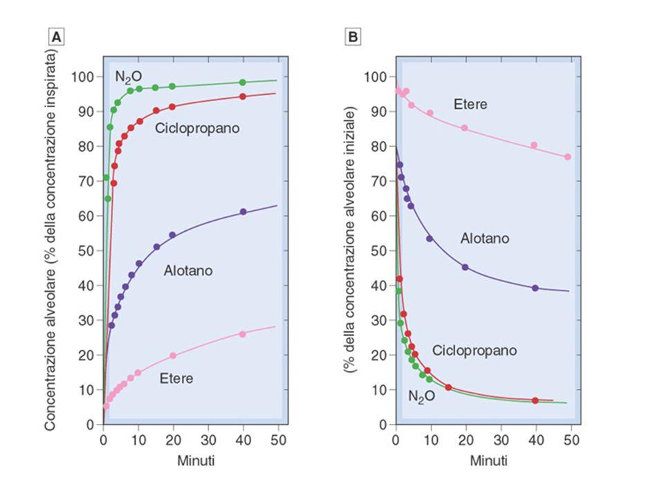 Velocità di equilibrazione degli anestetici inalatori nell'uomo
