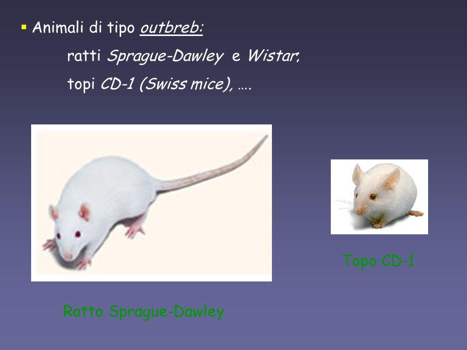 Animali di tipo outbreb:
