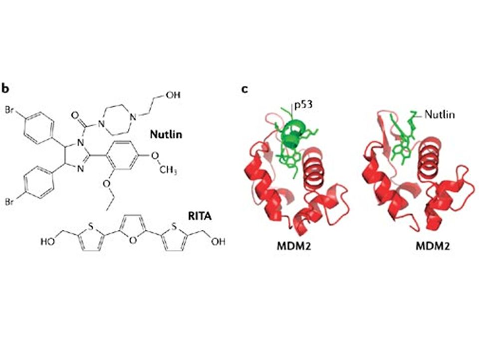 b | Structure of Nutlin (left) and RITA (right), the first small-molecule inhibitors of the p53–MDM2 interaction73, 75.