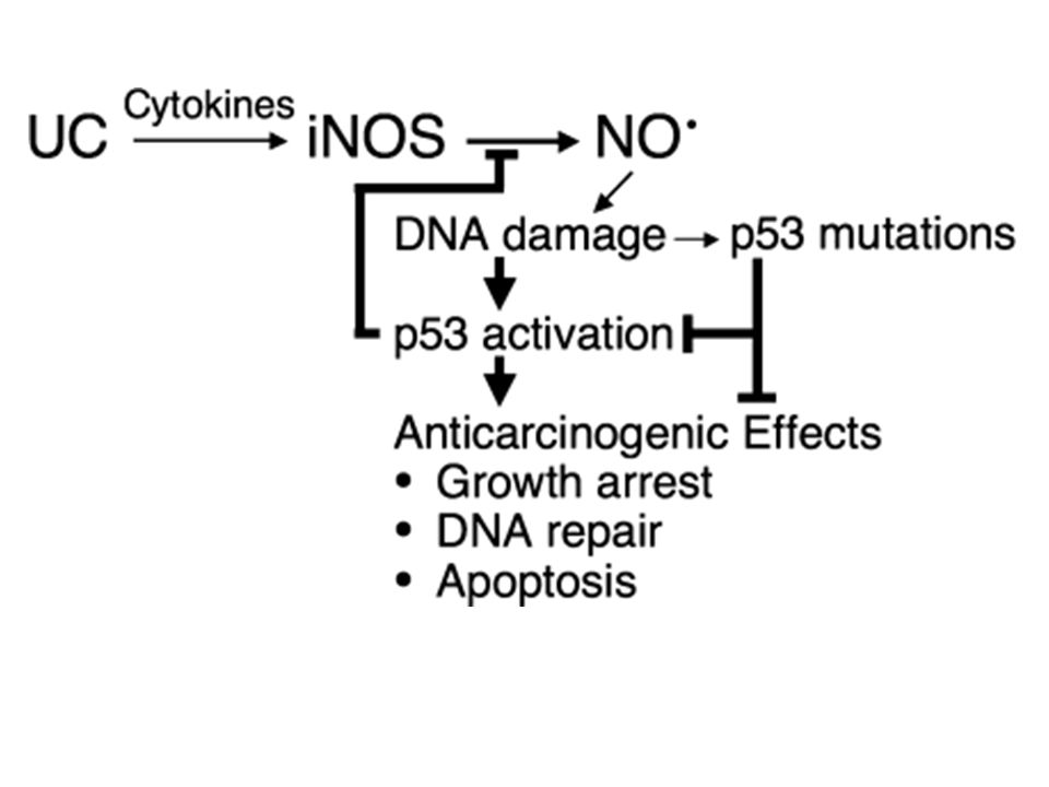Figure 4. NO possesses both protumorigenic and antitumorigenic properties.