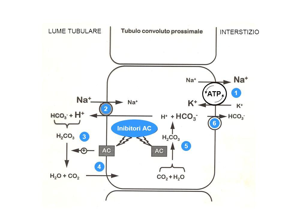 LUME TUBULARE INTERSTIZIO ATP 1 2 Inibitori AC 6 3 5 4