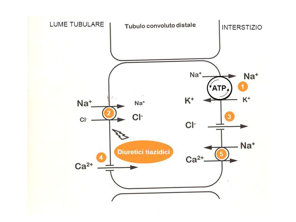 LUME TUBULARE INTERSTIZIO ATP 1 2 3 Diuretici tiazidici 5 4