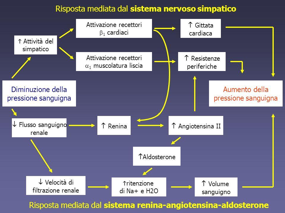 Risposta mediata dal sistema nervoso simpatico