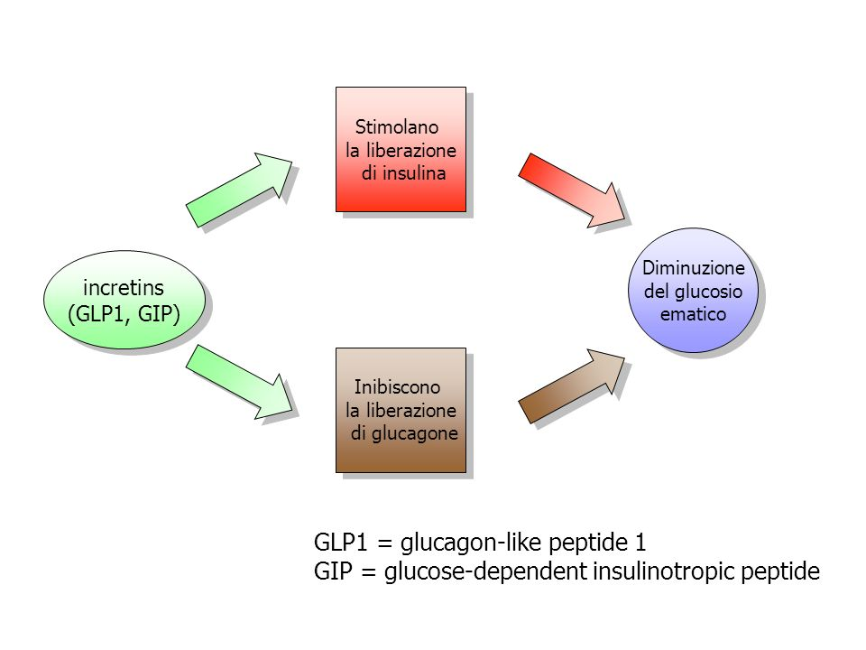 GLP1 = glucagon-like peptide 1