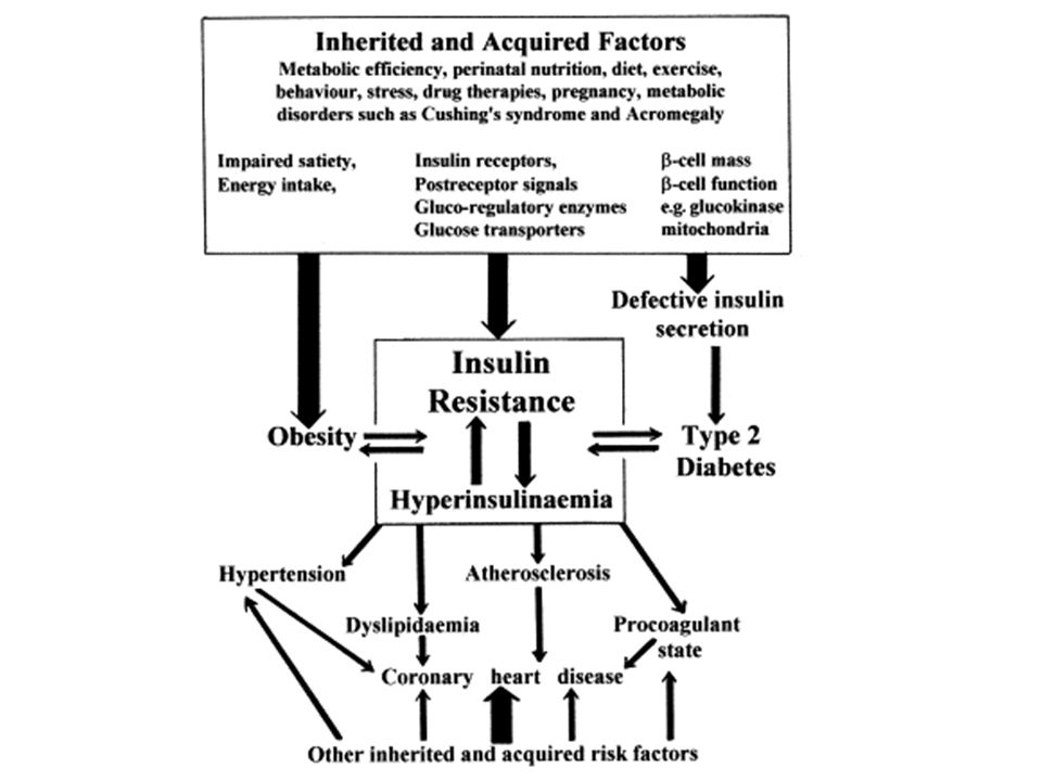 Scheme to indicate potential links between different components of the Insulin Resistance Syndrome (Syndrome X).
