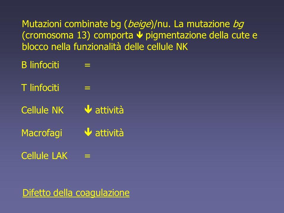 Mutazioni combinate bg (beige)/nu