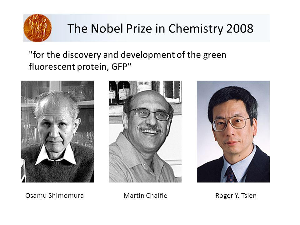 The Nobel Prize in Chemistry 2008