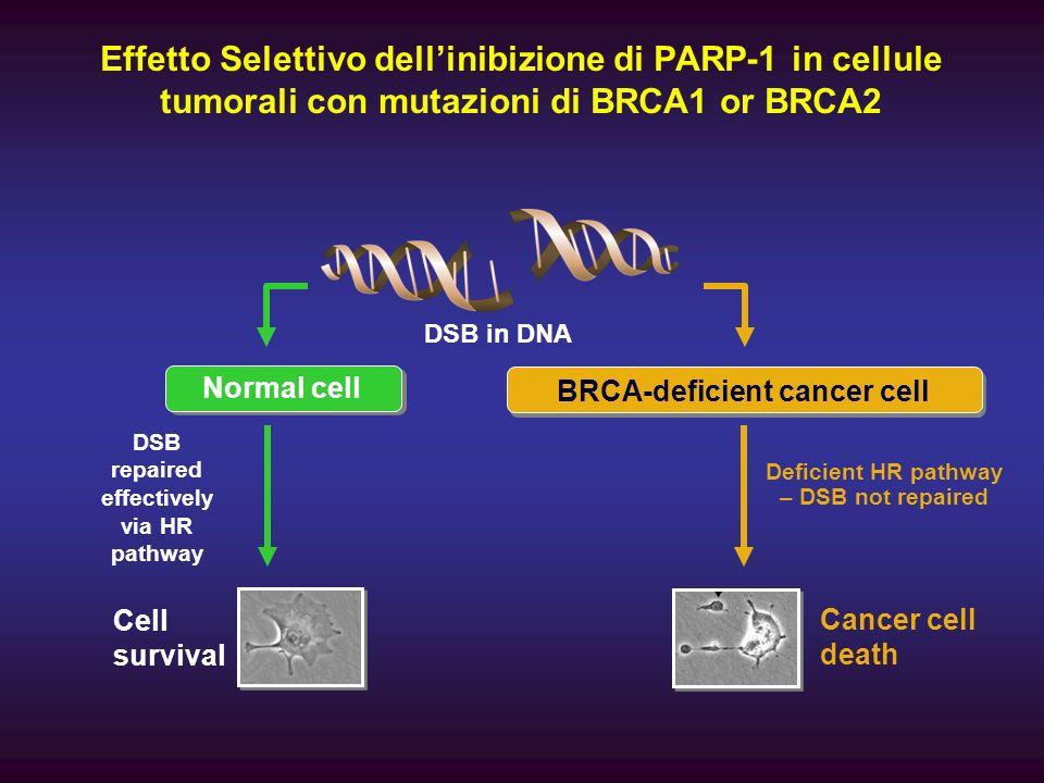 Effetto Selettivo dell'inibizione di PARP-1 in cellule tumorali con mutazioni di BRCA1 or BRCA2