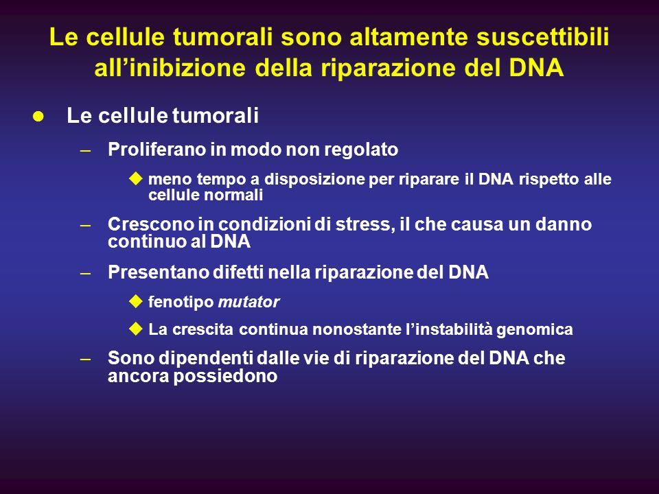 Le cellule tumorali sono altamente suscettibili all'inibizione della riparazione del DNA