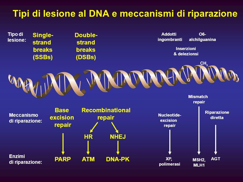Tipi di lesione al DNA e meccanismi di riparazione