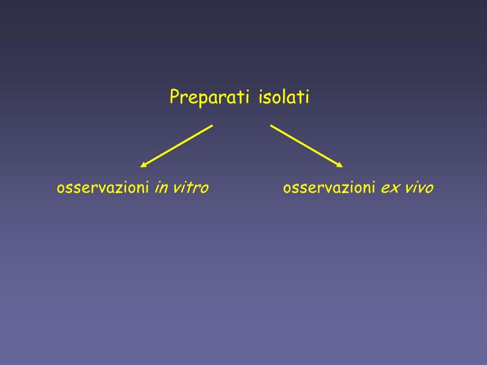 Preparati isolati osservazioni in vitro osservazioni ex vivo