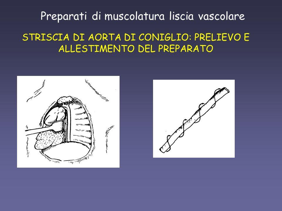 Preparati di muscolatura liscia vascolare