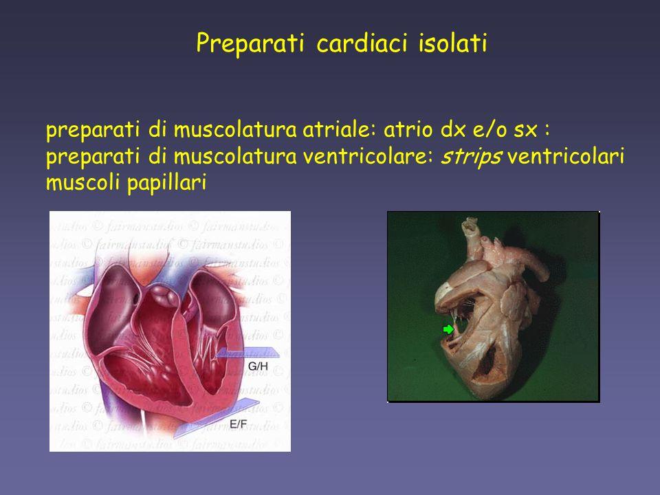 Preparati cardiaci isolati
