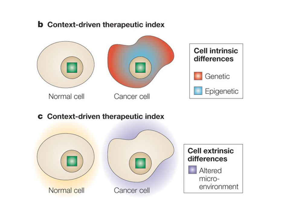 Framework for developing anticancer drugs with a high therapeutic index.
