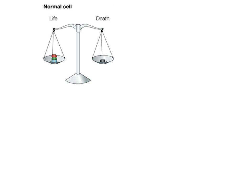 Survival signals in tumour cells: an Achille s heel