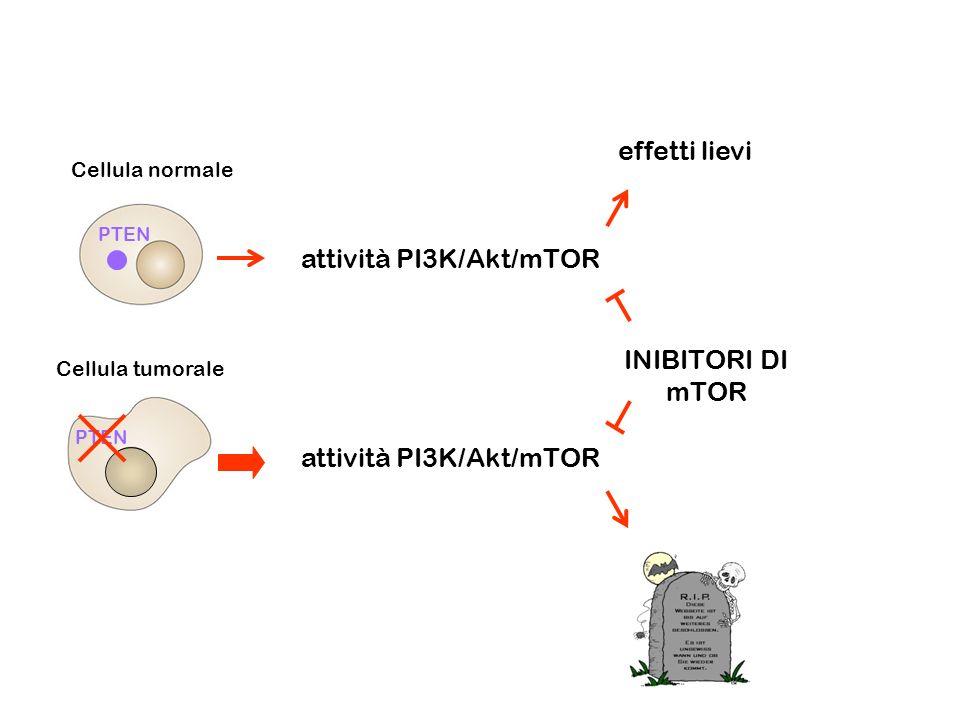 attività PI3K/Akt/mTOR
