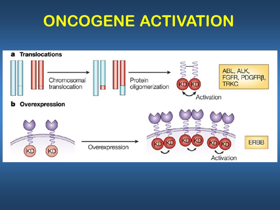 ONCOGENE ACTIVATION