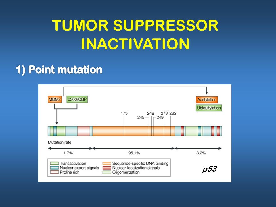 TUMOR SUPPRESSOR INACTIVATION
