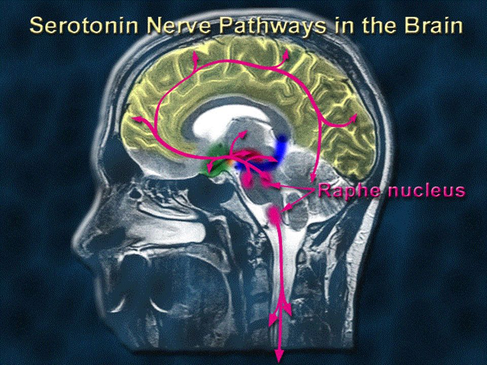 The nerve pathway that is predominantly affected by Ecstasy is called the serotonin pathway.