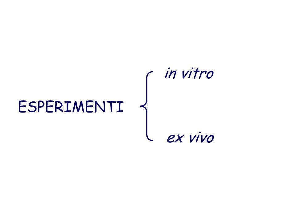 in vitro ex vivo ESPERIMENTI