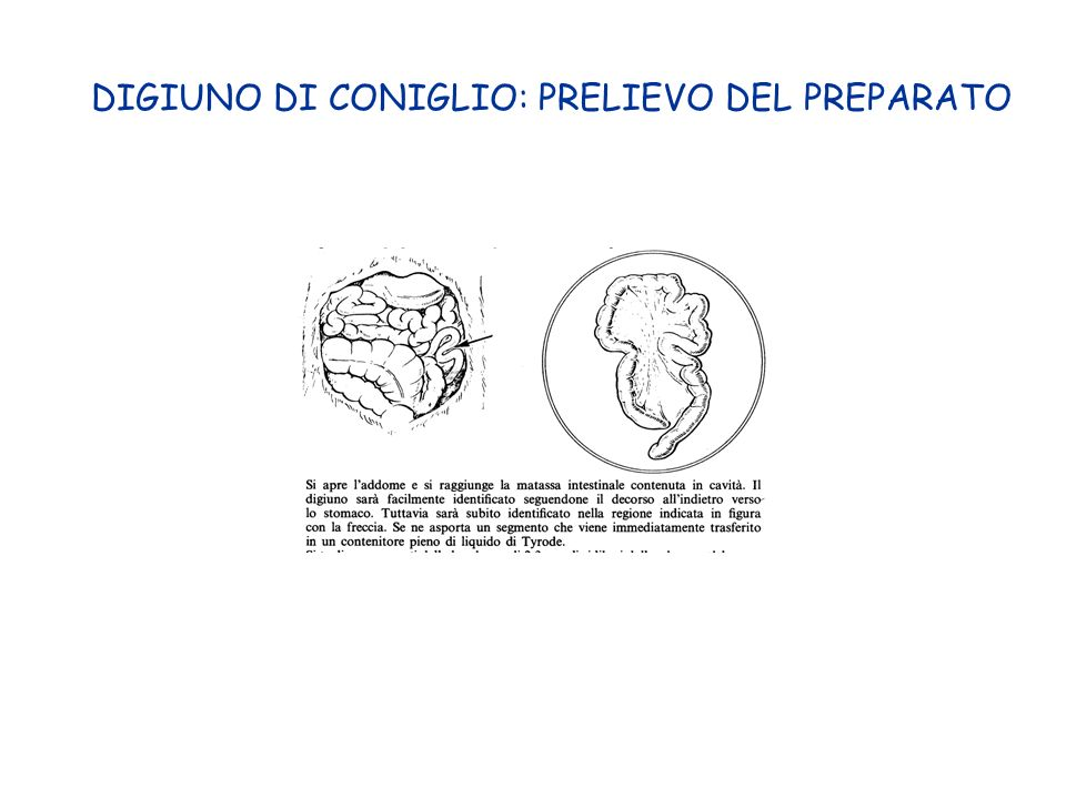DIGIUNO DI CONIGLIO: PRELIEVO DEL PREPARATO