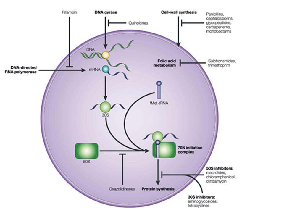 Figure 2 | Antibacterial drug targets