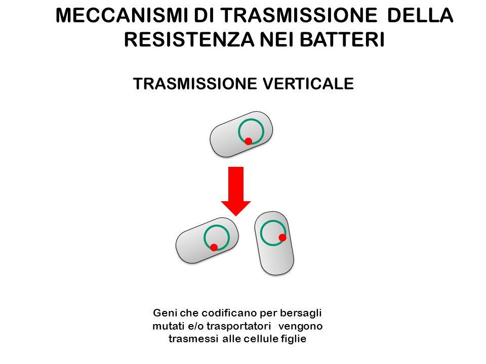 MECCANISMI DI TRASMISSIONE DELLA RESISTENZA NEI BATTERI