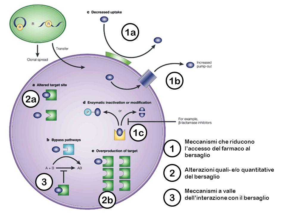 1a 1. Meccanismi che riducono l'accesso del farmaco al bersaglio. 1b. 1c. 2a. 2b. 2. Alterazioni quali- e/o quantitative del bersaglio.