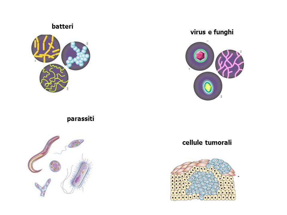 batteri virus e funghi parassiti cellule tumorali