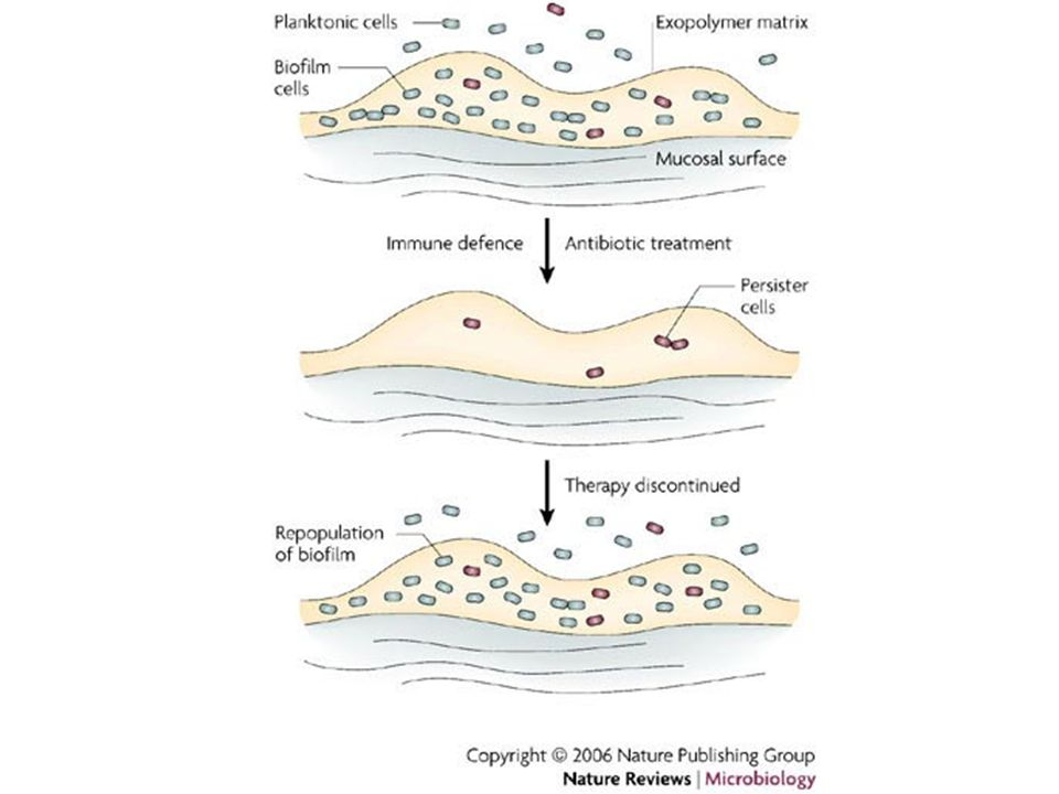 FIGURE 4 | Biofilm drug resistance