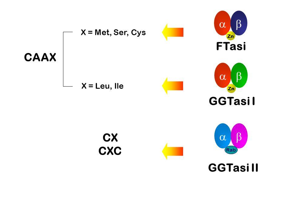   FTasi CAAX   GGTasi I GGTasi II   CX CXC X = Met, Ser, Cys