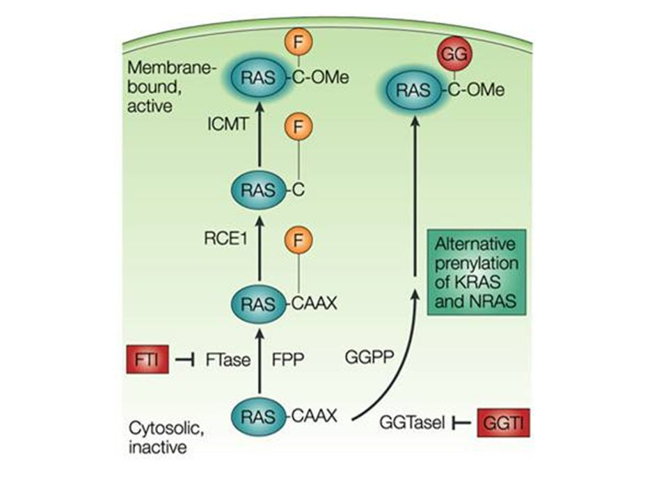 RAS processing and association with the plasma membrane