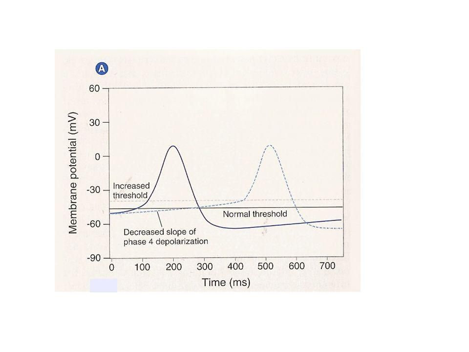 EFFECTS of Class I Antiarrhythmics and natural agonists on the SA node action potential.