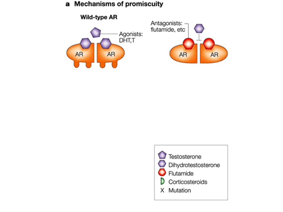 The promiscuous androgen receptor