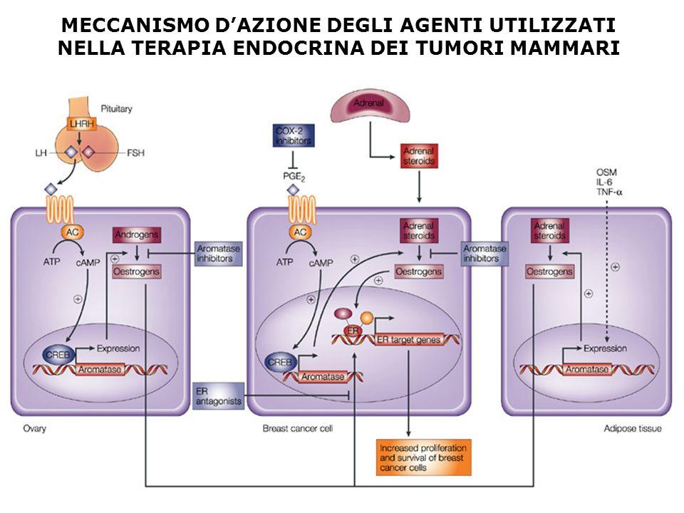 MECCANISMO D'AZIONE DEGLI AGENTI UTILIZZATI NELLA TERAPIA ENDOCRINA DEI TUMORI MAMMARI