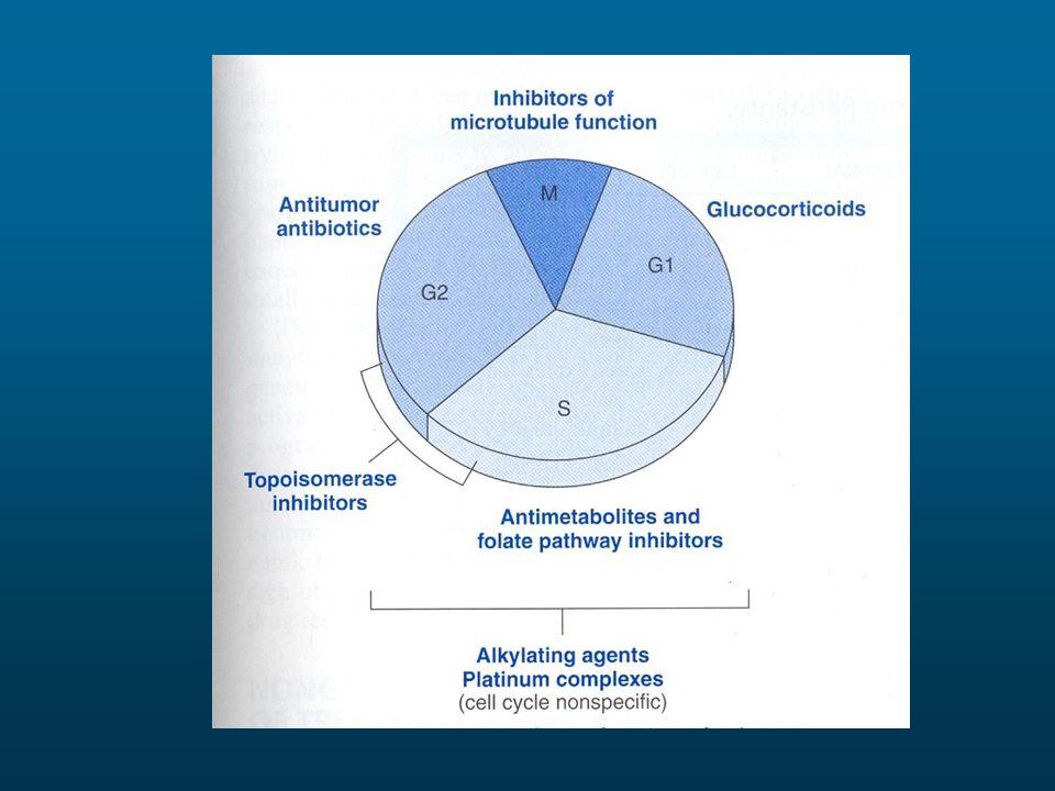 Ciclo-specificità delle diverse classi di farmaci antineoplastici