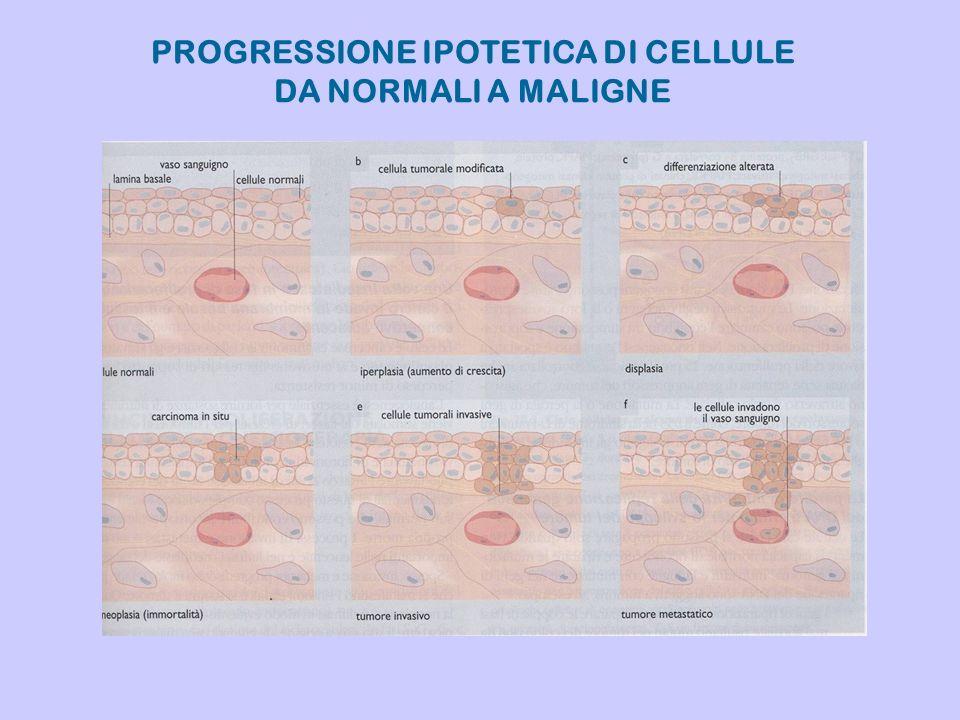 PROGRESSIONE IPOTETICA DI CELLULE